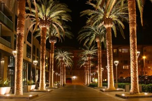 SAN_JOSE_CALIFORNIA_PALM_TREE_2010