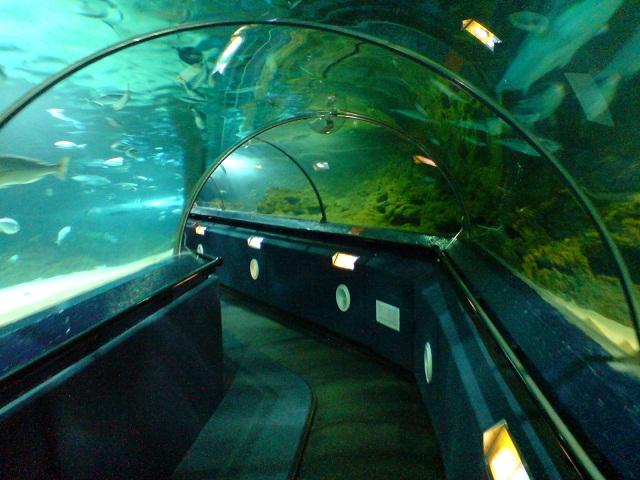 Kelly_Tarlton_Aquarium
