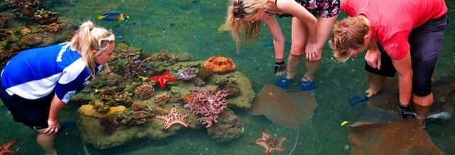 The Living Reef on Daydream Island