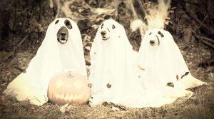 halloween-dogs retro
