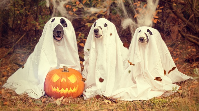 Halloween fun